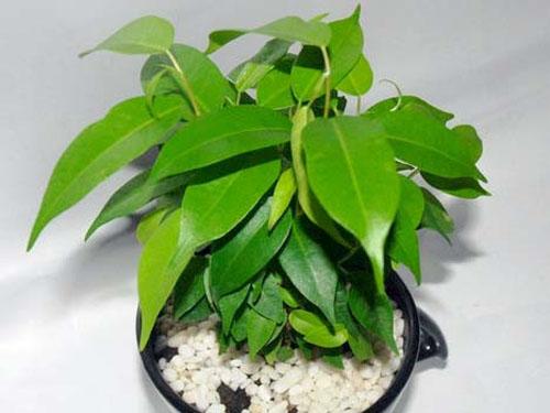 这5种植物能很好改善室内干燥?