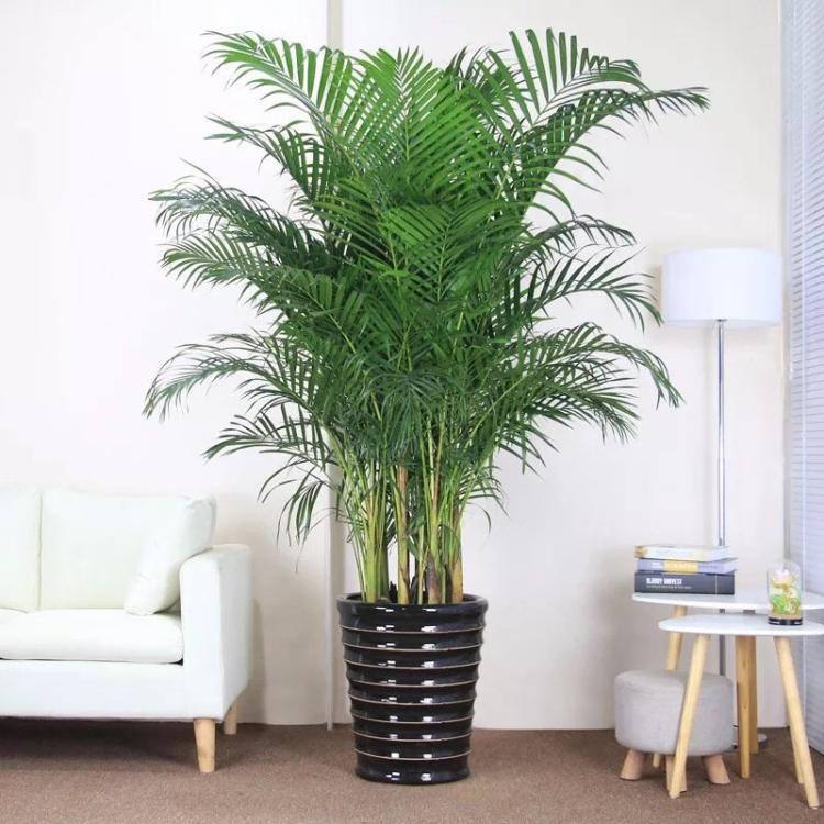 有哪些净化空气的室内花草?