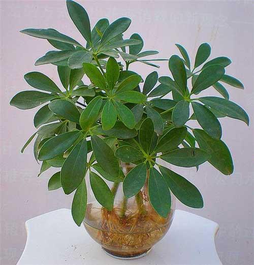 有哪些除甲醛很厉害的植物推荐