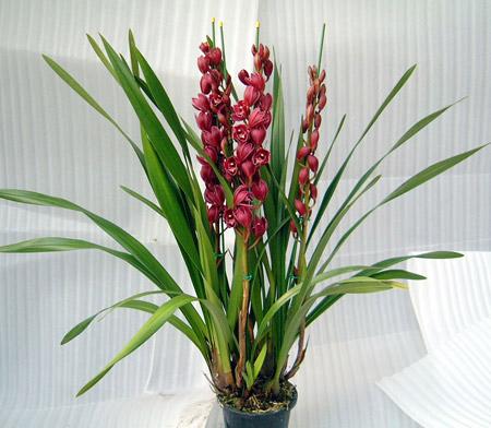 家庭养花怎么养?温水浇花的好处是什么