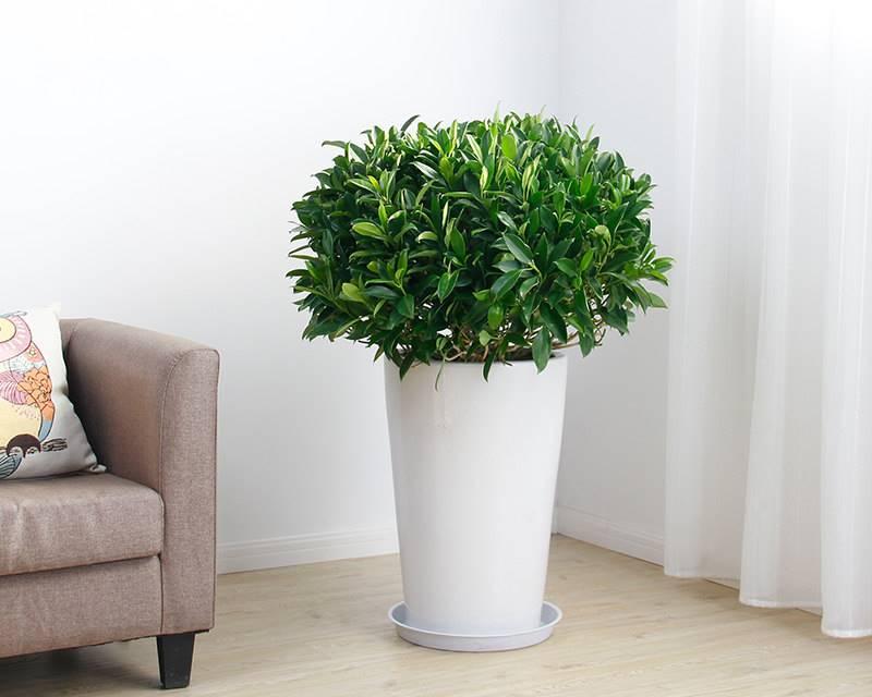 新房子合适放什么植物?刚室内装修完的房屋合适养什么绿色植物