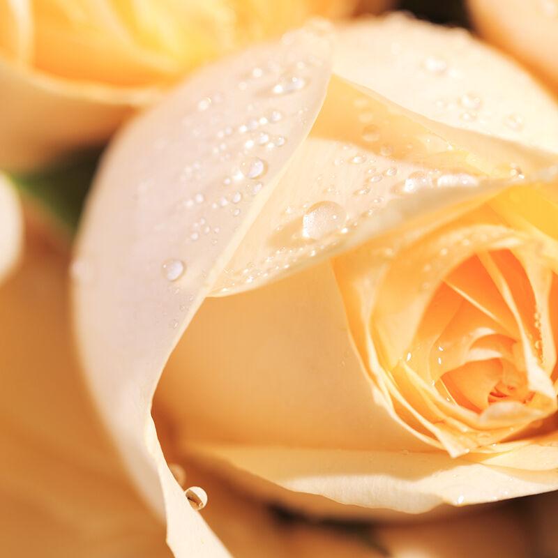 钟情你一世-33支精品香槟玫瑰