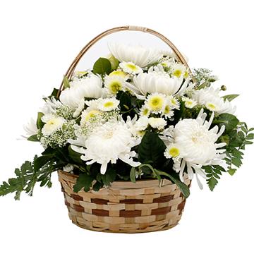 哀思如潮-9支亚博体育官方通道白菊花